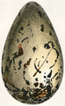 Oeufs002b,47.png